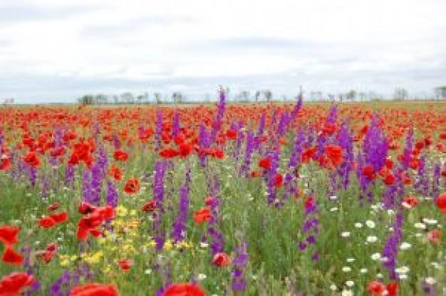 bloemen-veld_21050645